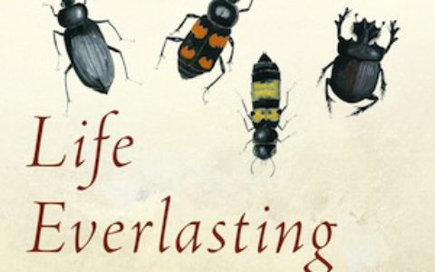 life_everlasting_feature