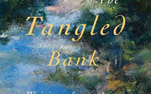 tangled_bank_feature