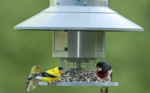 WingscapesFeeder_9783DC