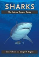 All Your Shark Questions Answered
