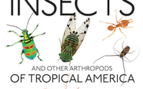 Insects Tropical America cover