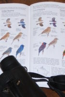 Happy Anniversary to The Birder's Library!