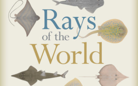 rays-of-the-world-cover