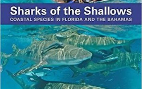 Sharks Shallows cover