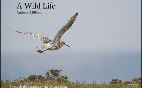 Wild Life Milbank cover