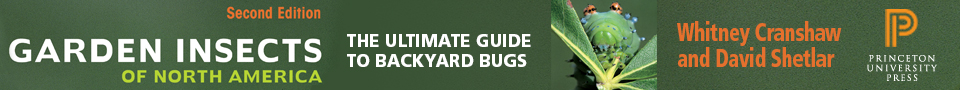 Garden Insects Banner
