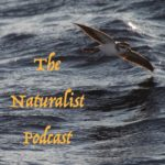 Naturalist Podcast logo